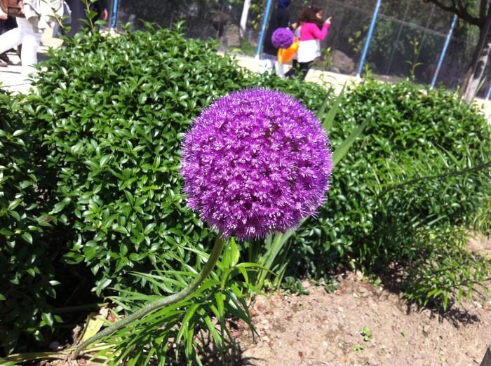 Flores, plantas e bichos no jardim