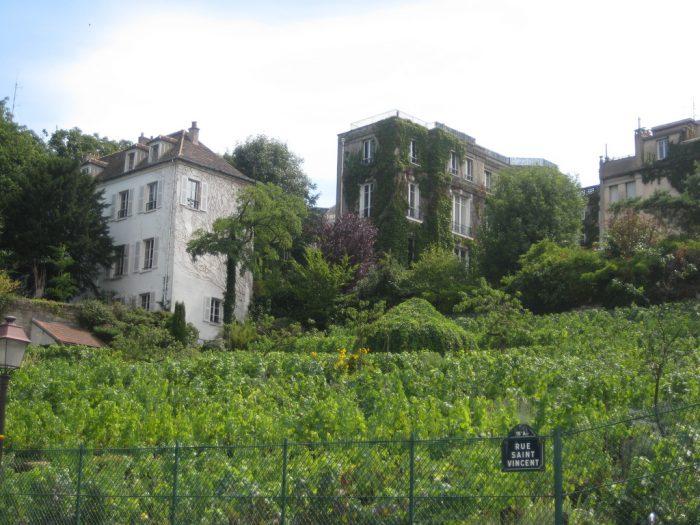 Os vinhedos de Montmartre