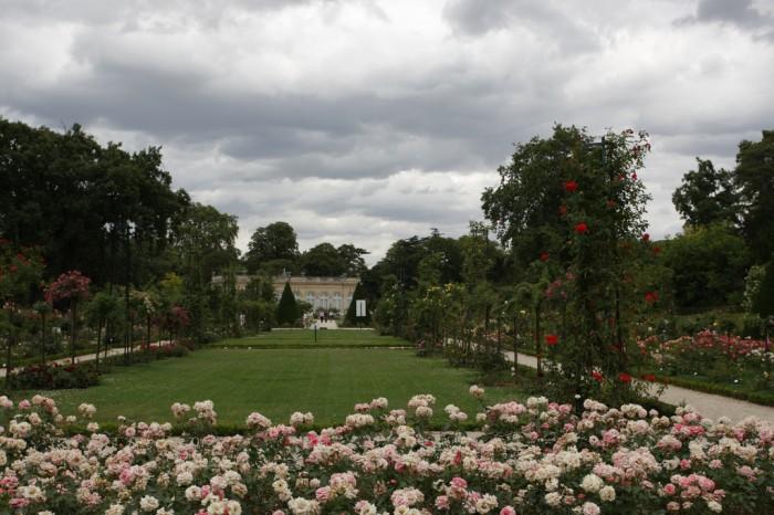 As roseiras do Jardin de Bagatelle, em Paris