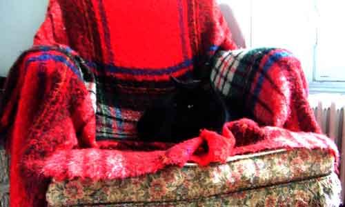 O Gato em sua proltrona exclsusiva