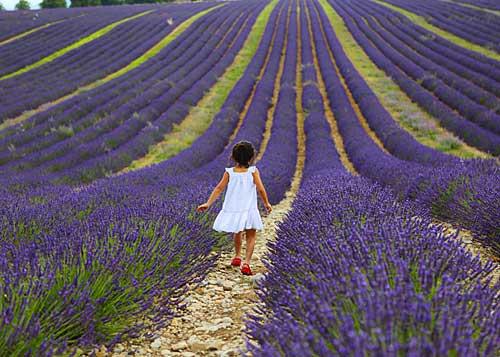 Lavandas da Provence