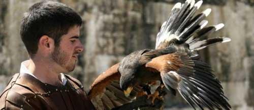 Águias e falcões de Provins
