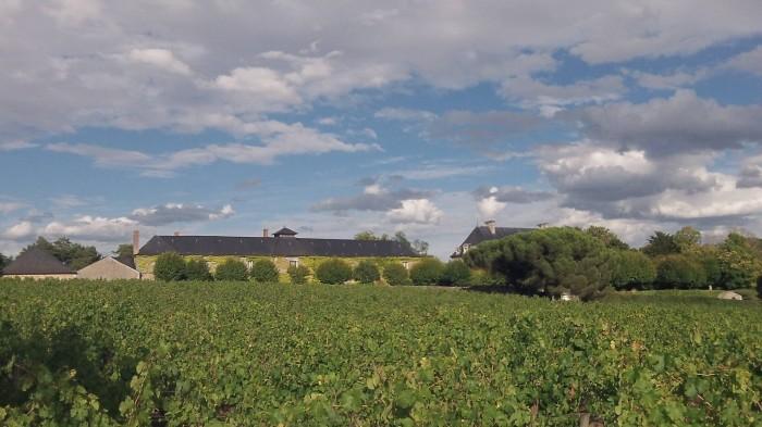 vins_automne