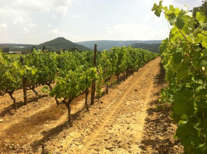 Vinhedos na Provence