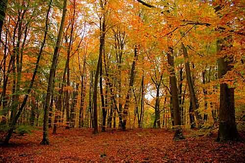 Outono em Fontainebleau