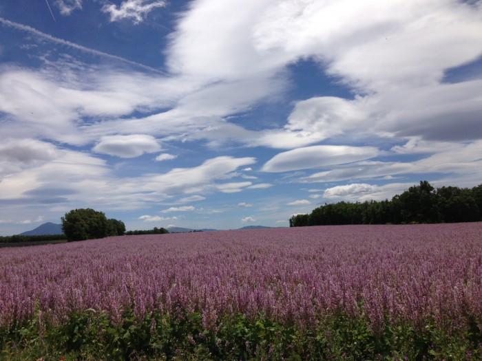Campo de lavandas na Provence. Foto de Hugues Heddebault