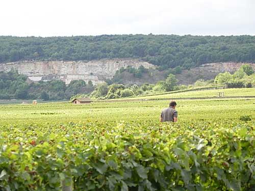 Os mais belos vinhedos da França