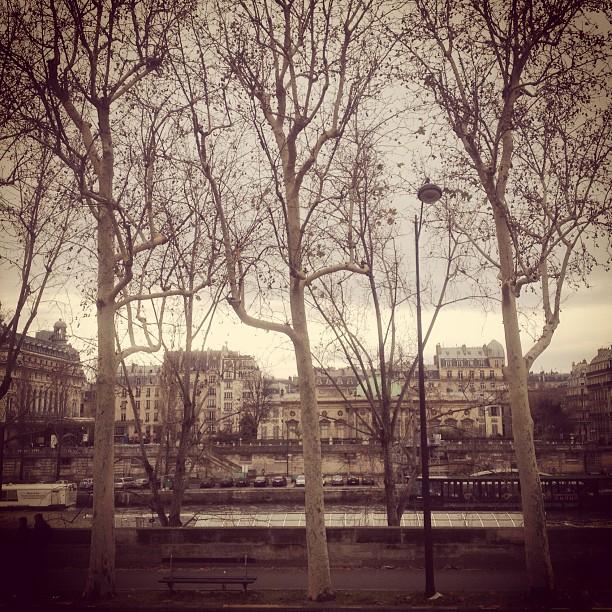 As árvores sem folha e o céu cinza em Paris