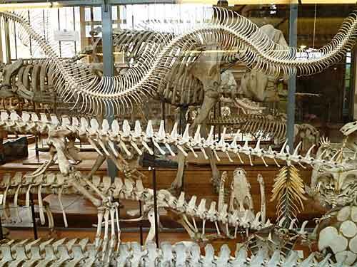 Jardin des Plantes, Museu de Paleontologia