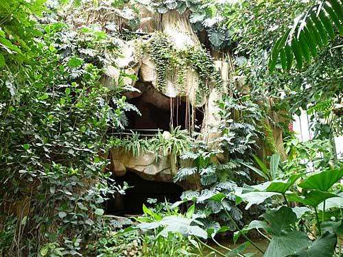 Estufa de planta tropicais