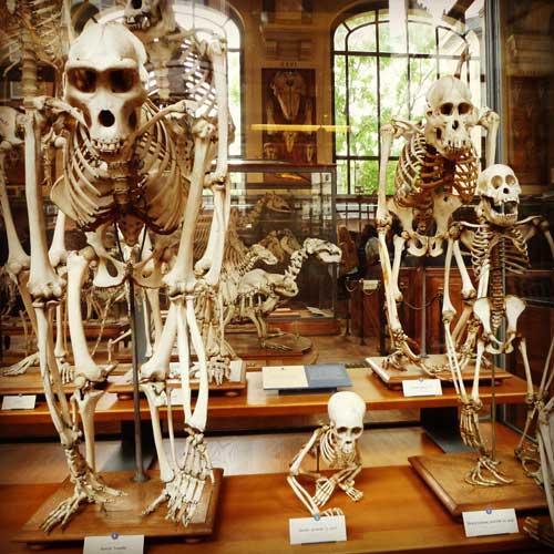Os mistérios do Museu de Paleontologia