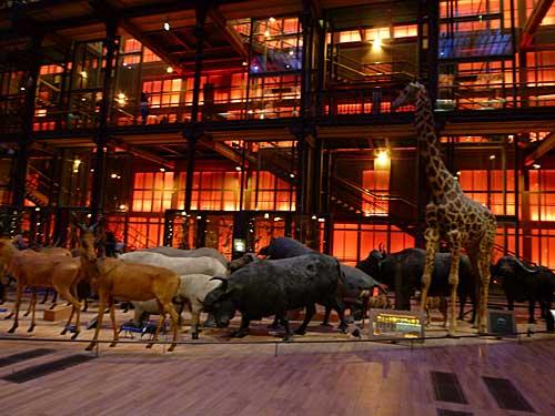 A espetacular Galerie de l'Evolution