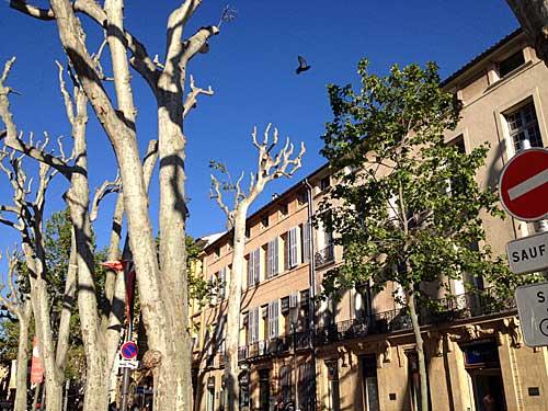Cours Mirabeau e suas árvores em maio