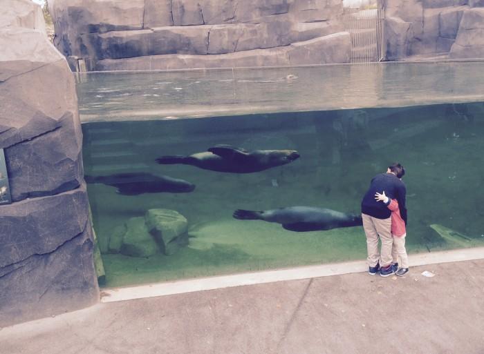 Pelo aquário, conseguimos ver como os leões marinhos são incríveis nadadores.