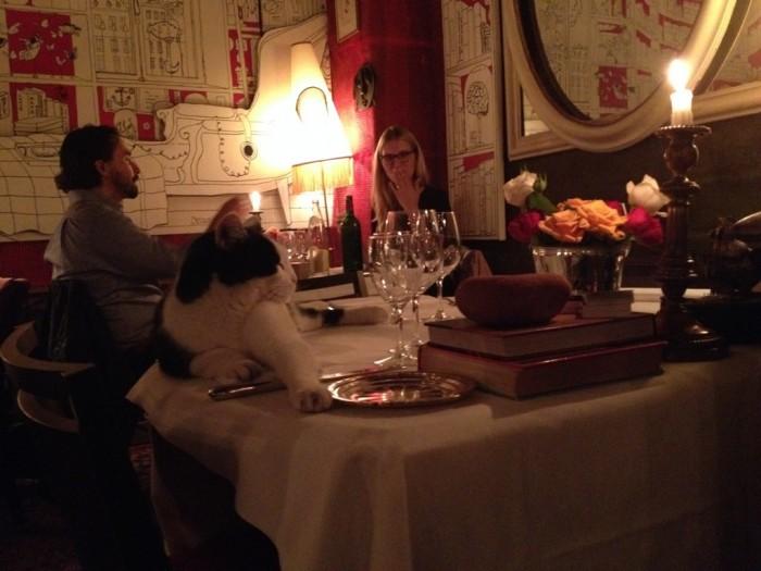 Sobre a mesa, um gato!