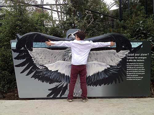 Painél onde as crianças adquirem a noção do tamanho do abutre