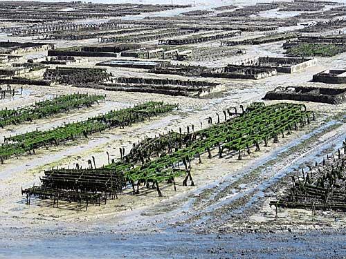 Cancale, fazenda de ostras