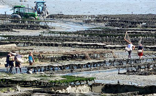 Fazendas de ostras em Cancale