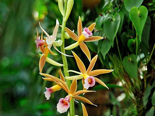 Exposição orquídeas raras