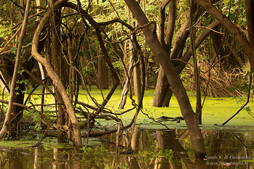 Iguarapé no Rio Negro