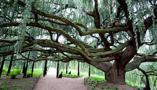 A árvore mais linda
