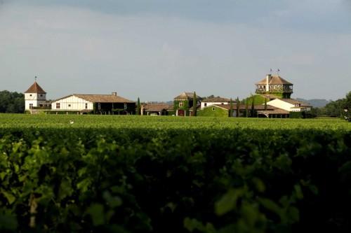 Vinhedo Château Haut Smith Lafitte