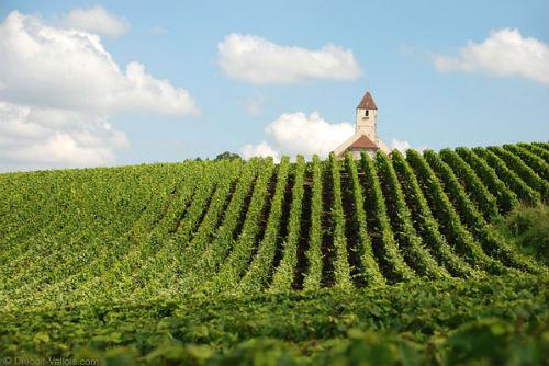 champanhes de pequenos produtores