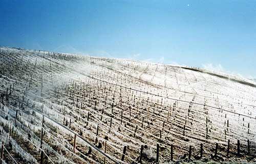 O gelo protege de temperaturas negativas