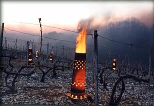 Técnica para proteger os vinhedos das baixas temperaturas