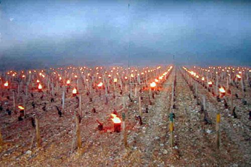 Aquecimento das vinhas