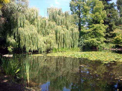 Jardim Botânico da Universidade de Cambridge. Foto: Mariana Martins