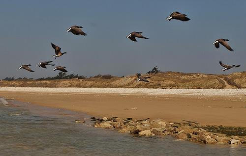 Ilha de Ré e seus pássaros. thierry Ilansades no Flickr