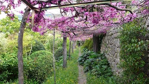 Os jardins de Grasse