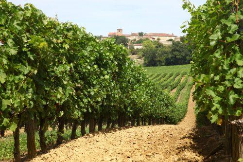Vinhedos na região de Madiran, no sudoeste da França
