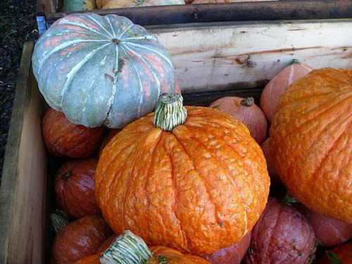 Principais produtos outono, abóbora. Didier Misson no Flickr