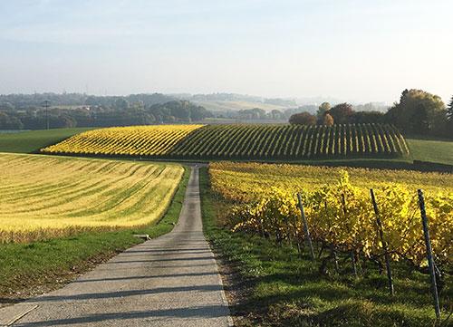 Os franceses gostam de vinho? Foto: a beleza dos vinhedos no outono