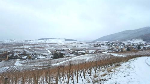 rota dos vinhos da alsacia