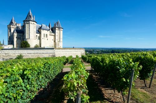 O que fazer no Vale do Loire? Visitar e fazer degustações nos produtores de vinho da região.