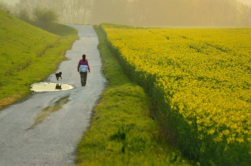 O que fazer no Vale do Loire? Ver os campos floridos na primavera.
