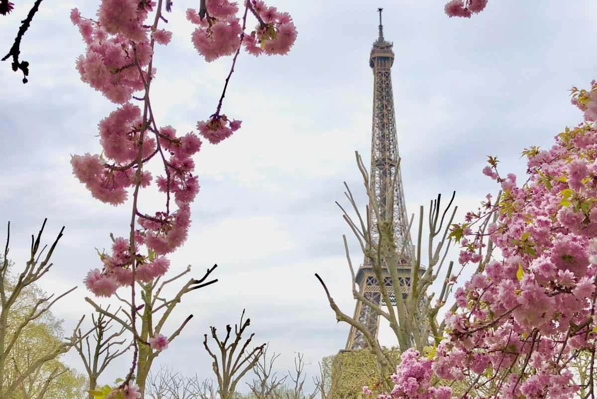 primavera em paris cerejeiras