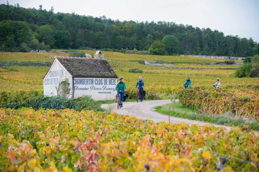 Vinhos da Borgonha: climats e clos