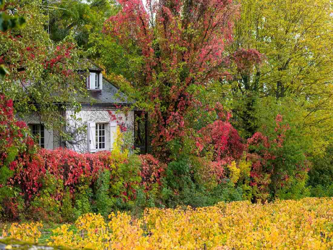 Outono é a estação mais bonita para se conhecer a Rota dos Grands Crus, na Borgonha.