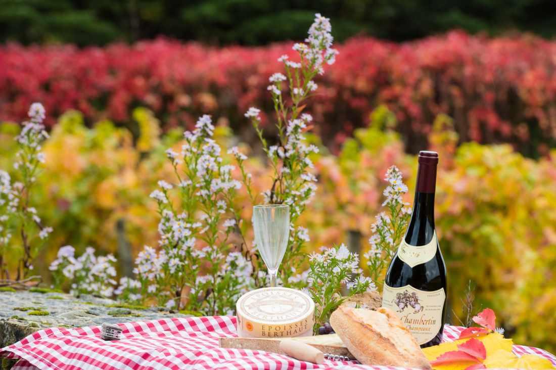 Vinhos da Borgonha: Gevrey Chambertin e queijo Epoisses durante piquenique na região.