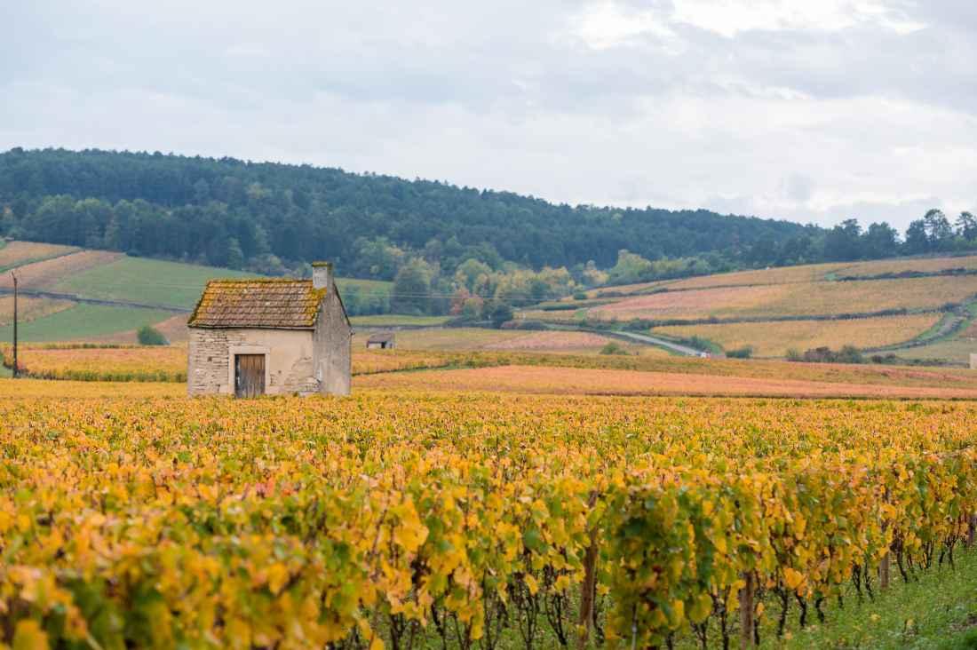 A Côte d'Or na Borgonha
