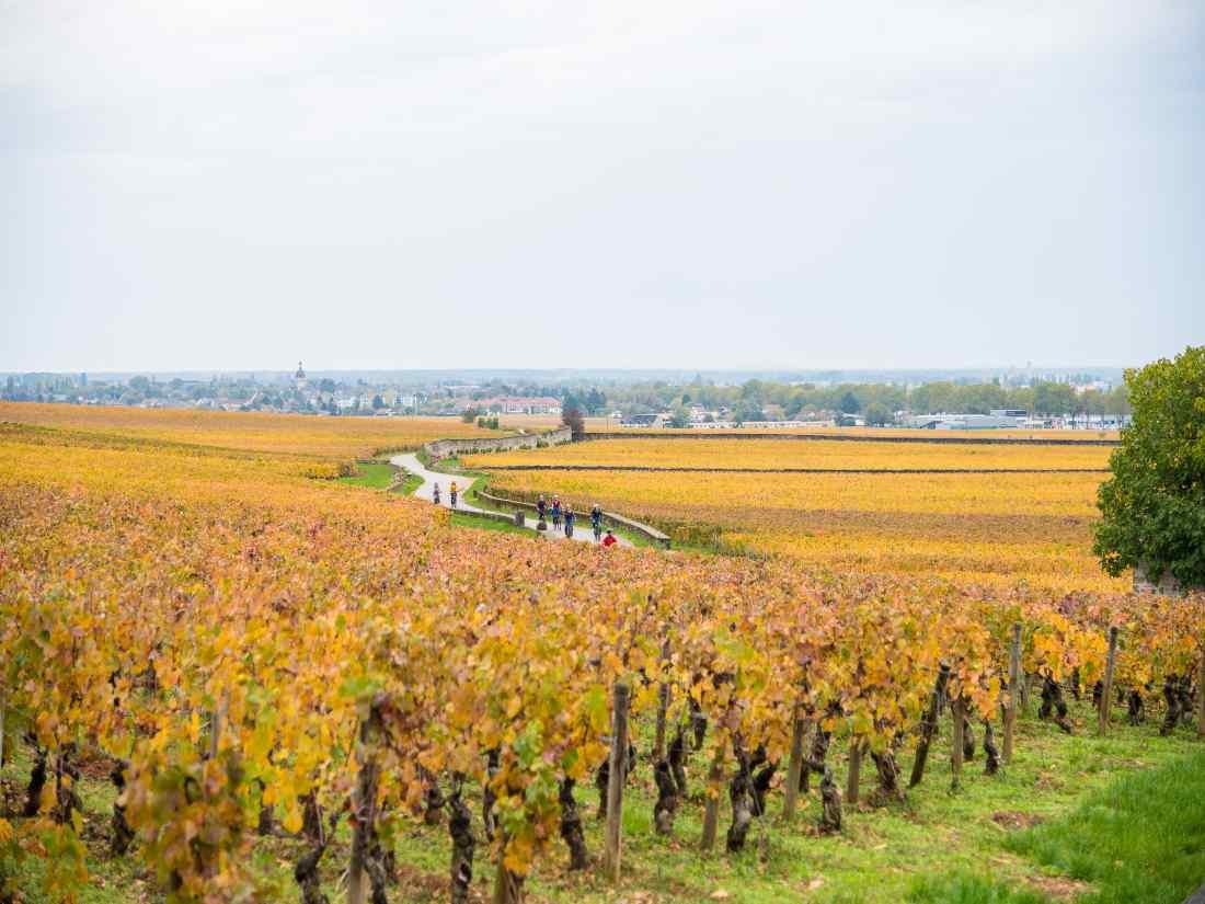 Rota dos Grands Crus na Borgonha: percursos exclusivos para bicicletas e passeios a pé.